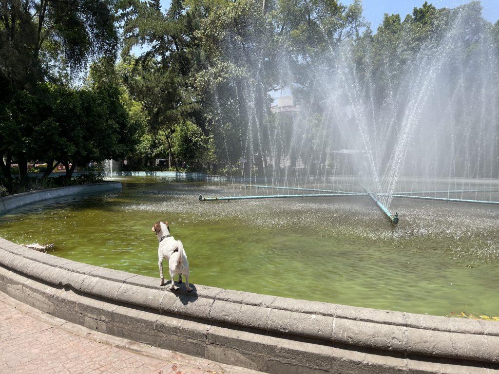 Plaza Luis Cabera dog fountain